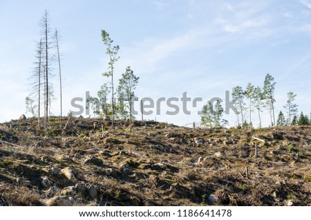 Renewable resources, a clear cut forest are
