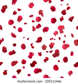 Repeatable rose petals in red, studio photographed with depth of field, isolated on white