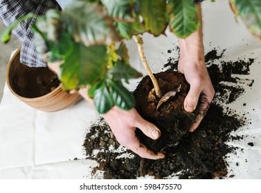 Replant Plants Images, Stock Photos & Vectors | Shutterstock