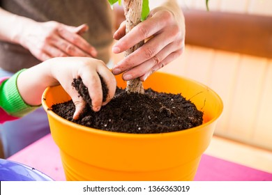 Replanting potted plant. A woman teaches a boy to work with houseplants. The child plants flowers. Replanting indoor flower in a new pot. Children's hands closeup.
