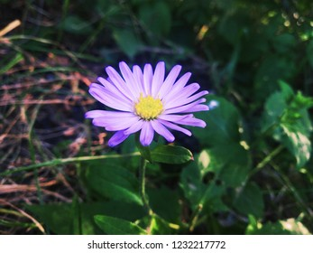 Flowersare the reproductive parts offlowering plants. ...Flowersare also called the bloom or blossom of a plant.flowerahave petals. Inside the part of the flower that has petals are the parts whi