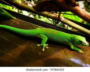 reptile green beauty insect wood