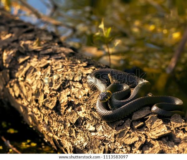 reptile-habitat-wild-nature-600w-1113583