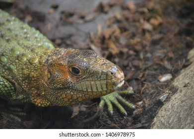 reptile head in its habitat