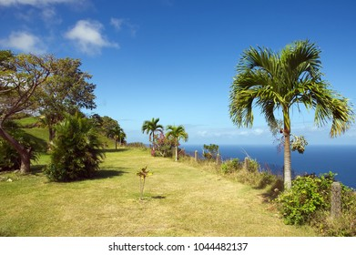 Republic of Trinidad and Tobago - Tobago island - Castara bay and flowers - Caribbean sea