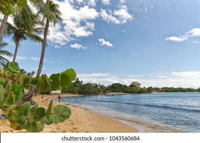 Republic of Trinidad and Tobago - Tobago island - Mt. Irvine bay - Tropical beach of Caribbean sea