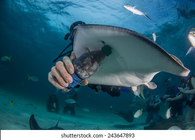 A re-purposed water bottle used to feed a southern ray