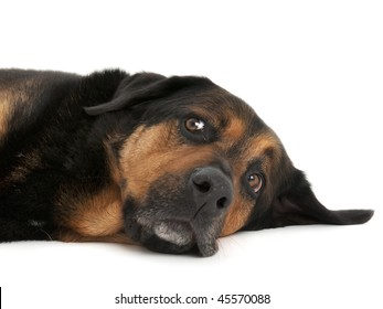 Rescue dog lying down with comical look