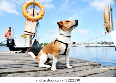 rescue dog on the docks.