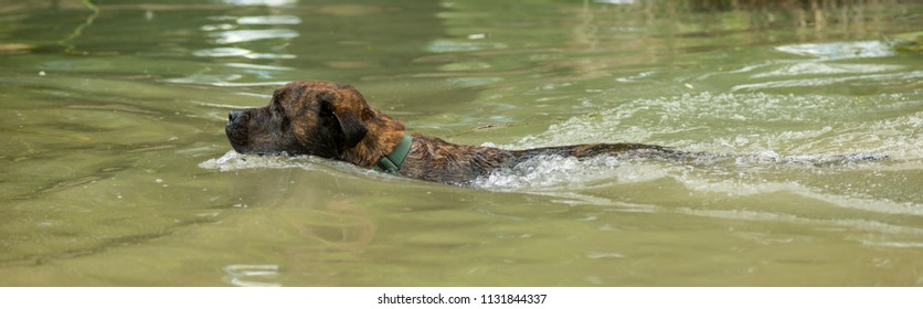 Rescue dog training to swim and fetch ball in water.