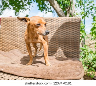 Rescue dogs at an animal Sanctuary on the caribbean island of Curacao