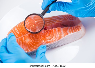 Research of fish in the laboratory on GMOs and harmful substances