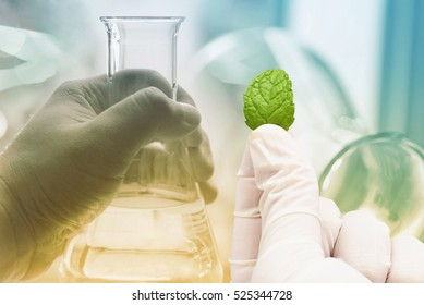 research herbal medicine at lab , test pharmaceutical
