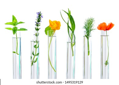 research on plants, aromatic herbs and flowers in test tubes