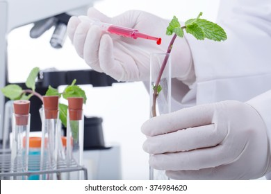 Research Scientist Plant vegetables in the agriculture industry