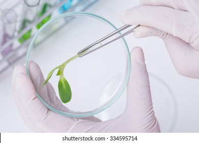Research Scientist (sunflower industry laboratory, for use in the agriculture industry)