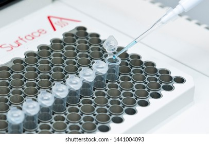 Researcher mixed DNA, polymerase, and oligonuclotides mixture in PCR tubes on the thermal cycler