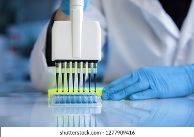 researcher pipetting samples in plate with multi well in the clinical lab / biochemical engineer working with fluid samples in plate multi well in the laboratory