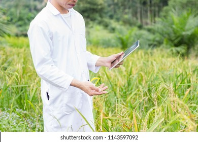 The researcher using IT device for his work