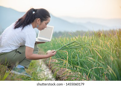 Researcher watching white onion by using computer in agriculture growing activity, controlling the growth and development of onion farming country outdoor scenery. Modern Farming Concept.