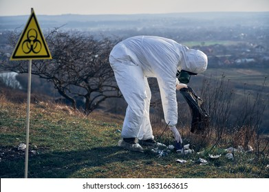 Researcher wearing white protective coverall, gas mask, collecting plastic garbage into black waste bag outdoors near biohazard sign. Concept of ecology, environmental pollution and biological hazard.