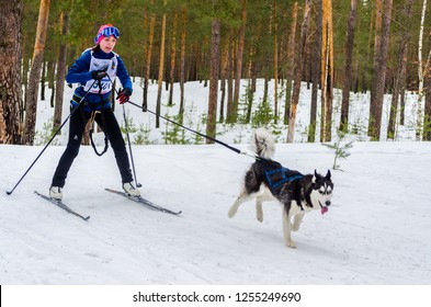 Reshetiha, Nizhniy Novgorod Oblast, Russia - 02.25.2017 - Siberian Husky sled dog skijoring race competition. Skier woman musher with two Husky dog in harness.