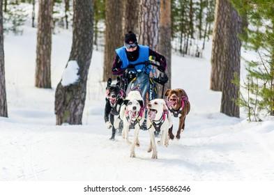 Dog Sledge Images, Stock Photos & Vectors   Shutterstock