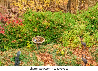 Residential backyard with a birdbath and fountain and two stone statues of cranes in the fall in Missouri, Midwest