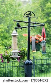 Residential Bird Feeder Station to Attract Backyard Birds