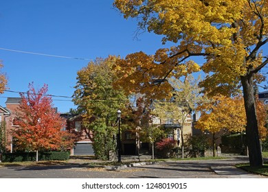 residential district with tree lined street in fall