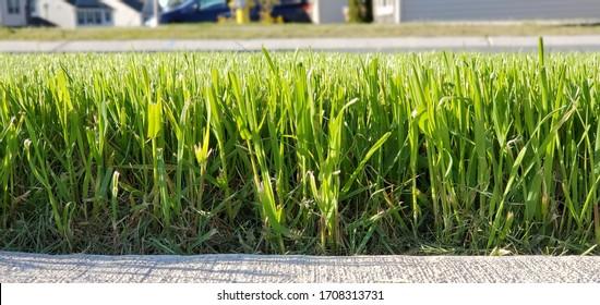 Residential Grass Sidewalk Neighborhood Mowed