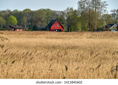 residential house with colorful red wooden facade stands behind a field of yellow-brown reed in front of green spring trees near the shore of the lake Dümmer in Lower Saxony (Germany)