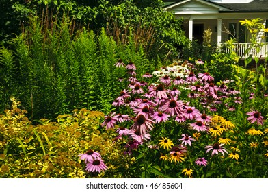 Residential landscaped garden with purple echinacea coneflowers and plants
