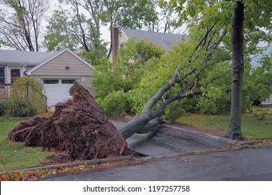 Residential street with downed tree after severe weather.
