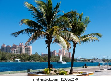 Resort Through Palm Trees