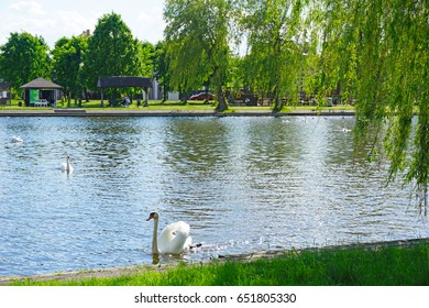 The resort town of Augustow and the canal on the Netta River, Poland. Boats and swans.