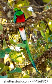 Resplendent quetzal found while hiking in Costa Rica