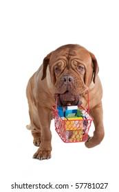 Responsible dogue de bordeaux going shopping