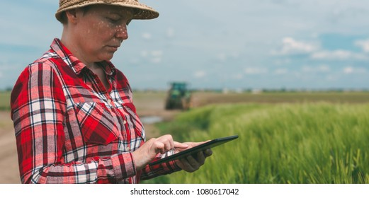 Responsible smart farming, using modern technology in agricultural production, female farmer agronomist with digital tablet computer using mobile app in barley crops field, tractor in background