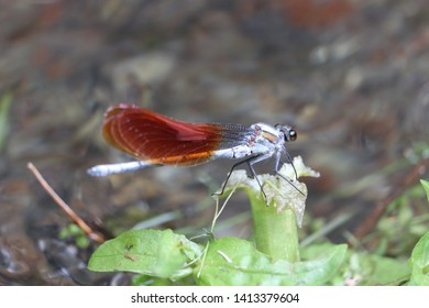 It is rest of the damselfly in the side of the river