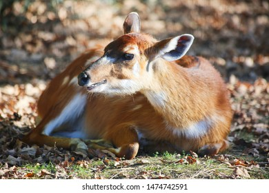 Rest moment of a lonely bambi