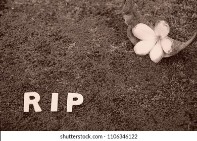 """Rest in peace. Old Flower,  dried leaf of Plumeria and word """"RIP"""" on yard. Sepia color.  Copy space."""