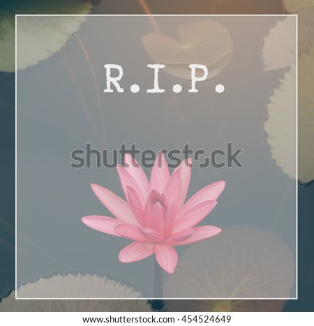 Rest Peace Rip Quote Lotus Flower Stock Photo Edit Now 454524649