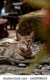 resting cat sits under bush