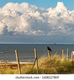 Resting crow at the Kijkduin beach in The Hague in October with storm clouds approaching from the North Sea in the background.