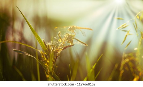 Resting Dragonfly on blade of grass side view footage.