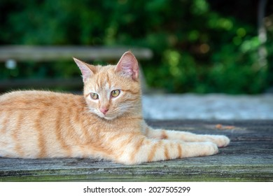 Resting on an old picnic table, this pretty tabby cat seems to be attentive to his surroundings but not alarmed. Bokeh effect.