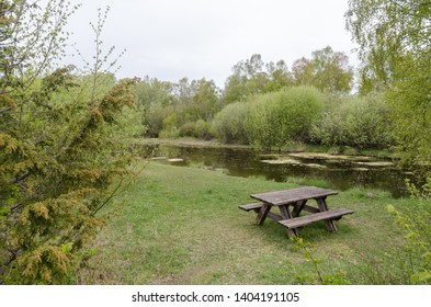 Resting place with furniture in a forest glade by springtime at a nature reserve on the swedish island Oland