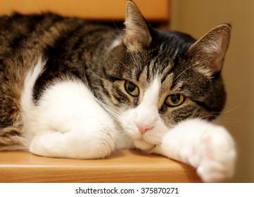 resting sweet cat