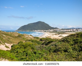 Restinga forest and Santinho beach in the background - Florianopolis, Brazil